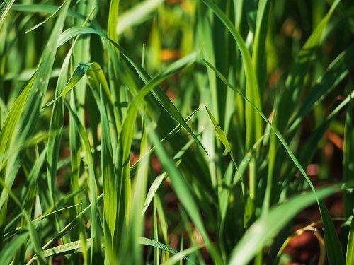 Come difendersi dal vicino che non taglia l'erba?