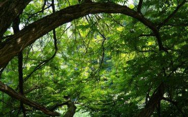 Come obbligare il vicino a potare gli alberi a sue spese