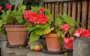 piantare fiori sul terrazzo?