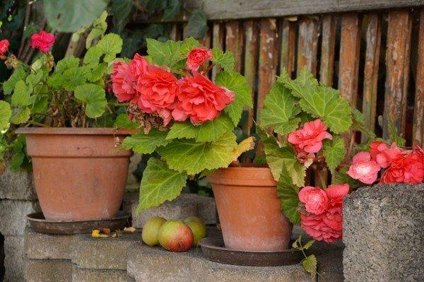 Posso piantare fiori sul terrazzo?