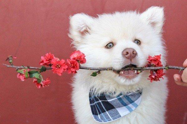 Come detrarre dalle tasse le spese veterinarie