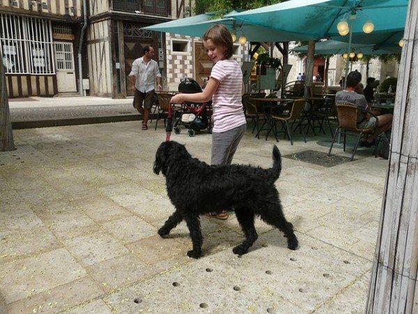 Non si può affidare un cane ad un figlio minore