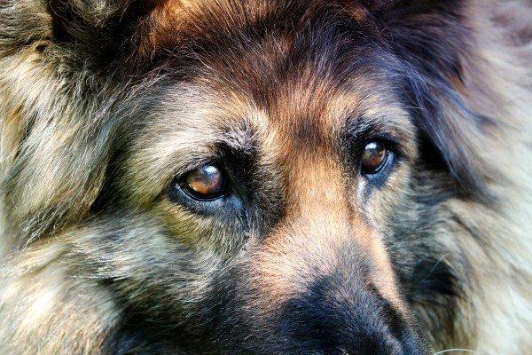 Lasciare il proprio cane sempre da solo in giardino è reato?