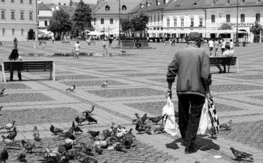 È legale dare da mangiare ai piccioni?