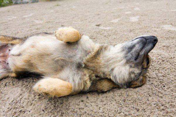 Auto investe un cane: a chi spetta il risarcimento?