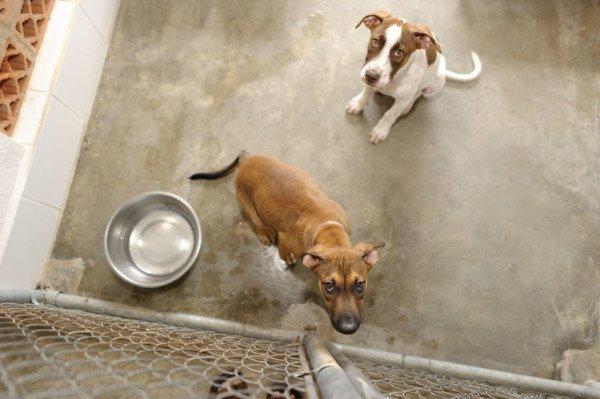Animali domestici: anche la sofferenza psichica è reato