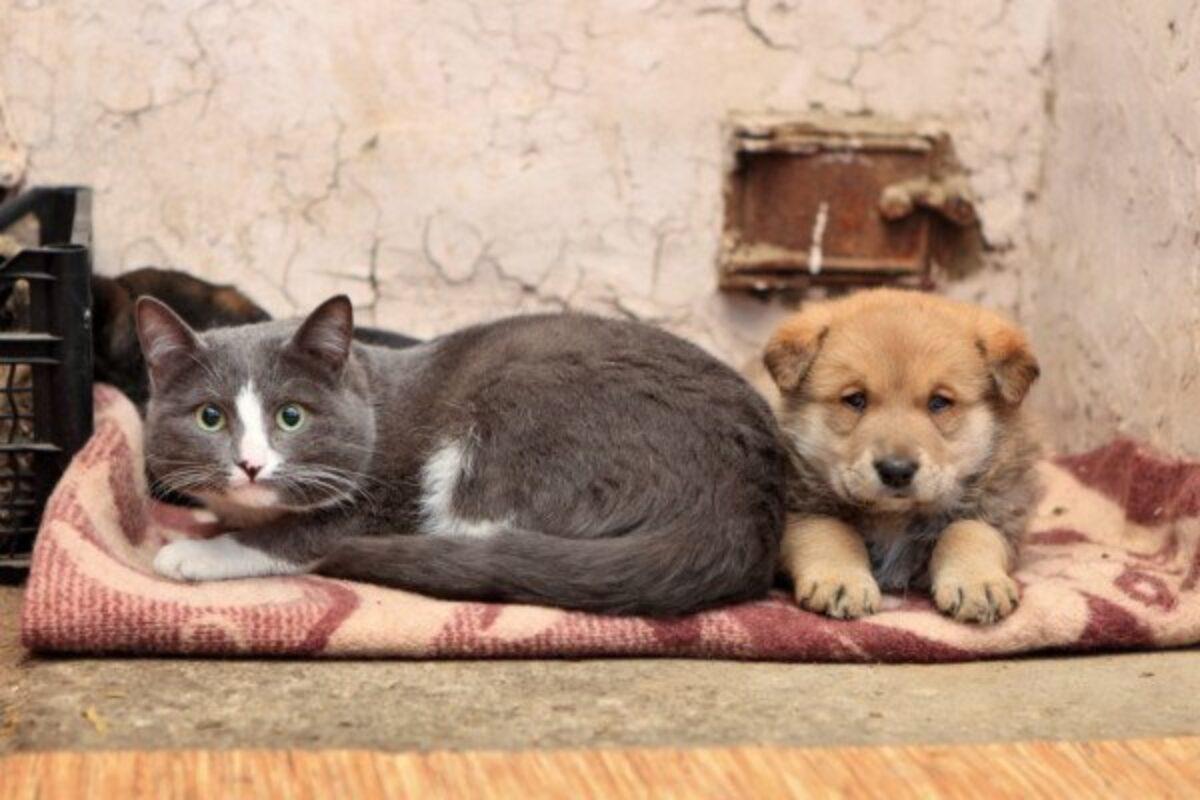 Rete Per Gatti Condominio vietato accudire cani e gatti randagi nel giardino del