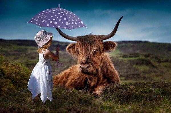 L'ombrello è un'arma impropria