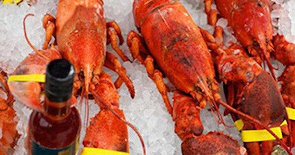 Aragoste legate e tenute vive al freddo: reato per il ristorante