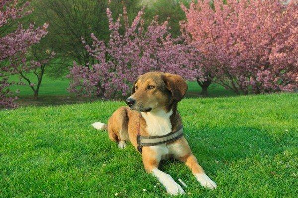 Passaggio di proprietà del cane: come fare