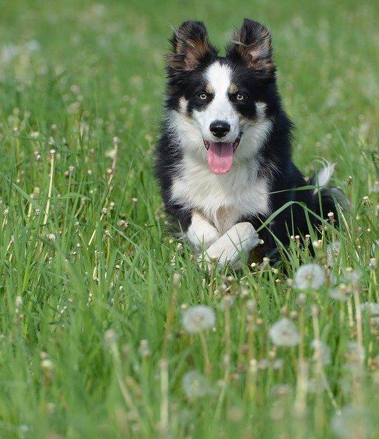 Il sindaco può vietare di portare i cani al parco?