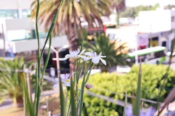 Si possono mettere delle fioriere sul terrazzo condominiale?