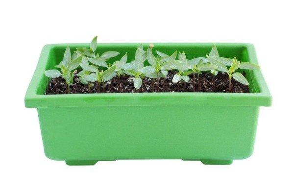 Posso mettere piante e fiori sul pianerottolo di casa?