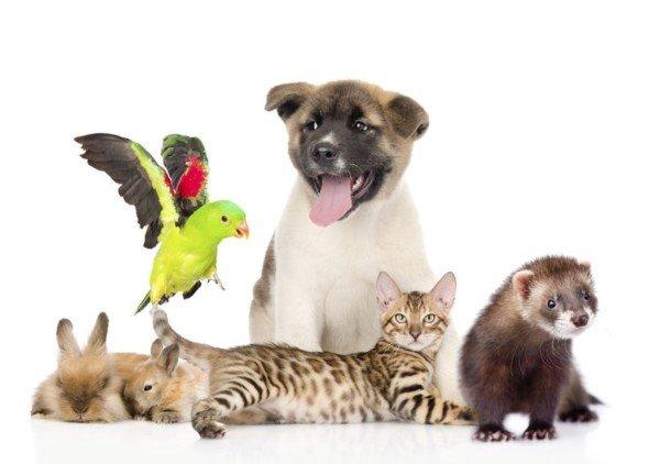Reati contro gli animali