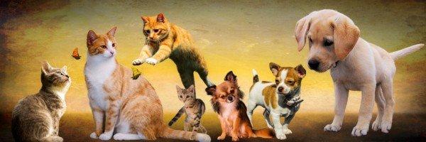 Animali domestici: possono viaggiare in aereo?