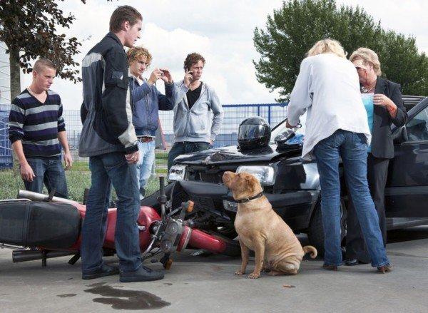Omissione di soccorso per incidente stradale: chi rischia?