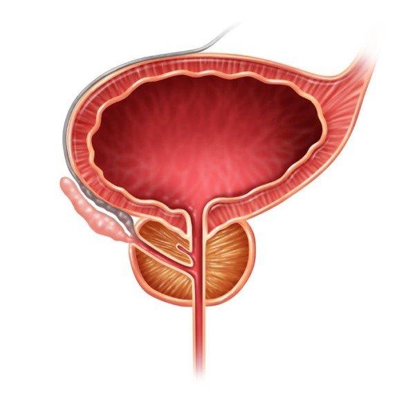 I diritti di chi ha un tumore alla prostata