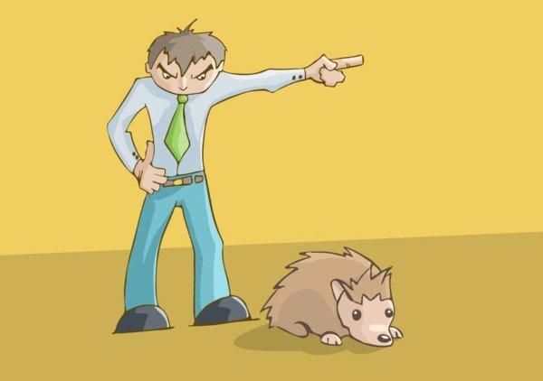 Ratti in casa in affitto: chi paga la derattizzazione?