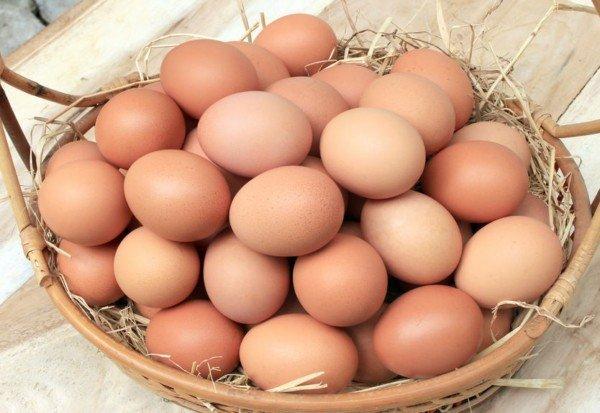 Uova contaminate dall'insetticida Fipronil: riunione UE