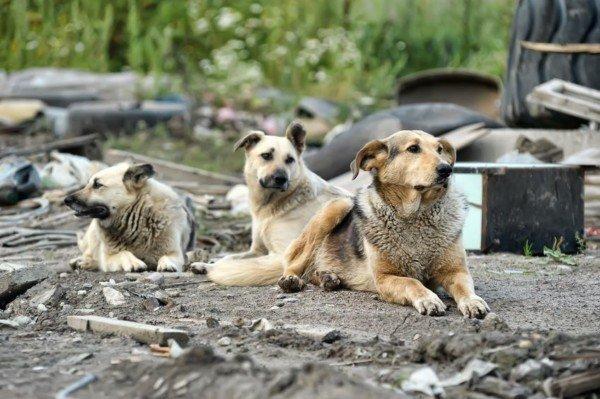 Cani randagi: addio risarcimenti per morsi e danni