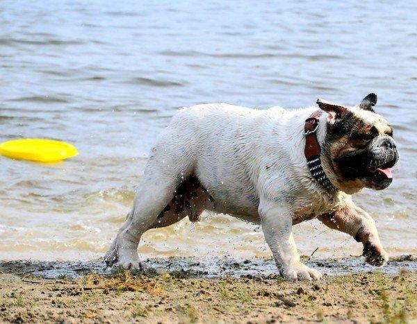 Cosa non si può fare in spiaggia
