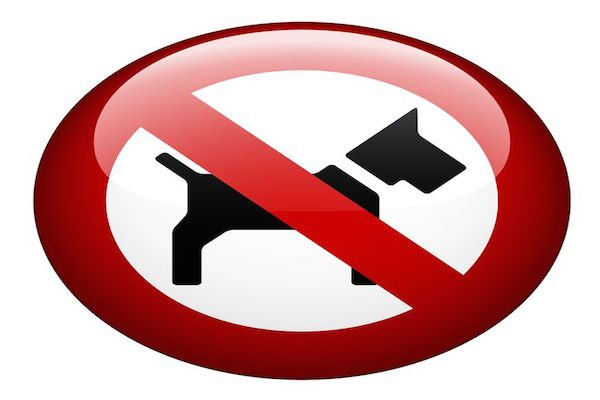 I cani possono entrare in ristoranti, bar e pizzerie?