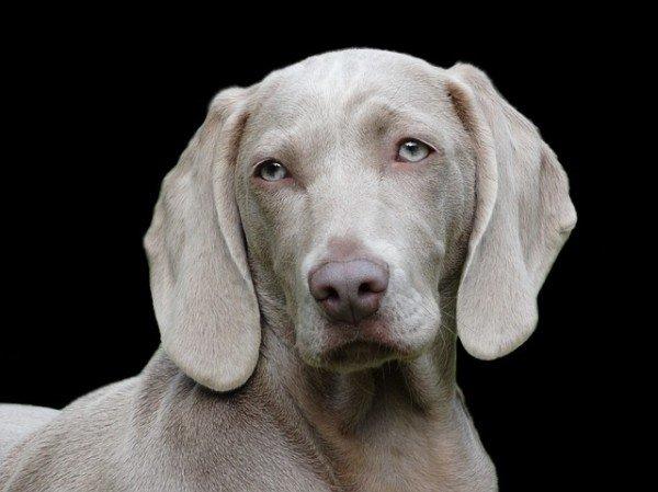 Cosa fare cane smarrito
