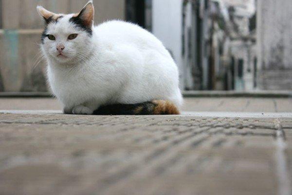 Dove Seppellire Il Gatto