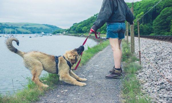 Cane libero senza guinzaglio: che si rischia?