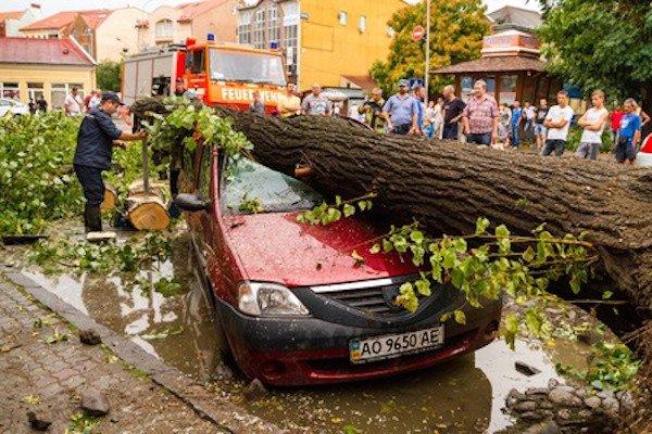 Se cade un ramo di albero sull'auto il Comune risarcisce?