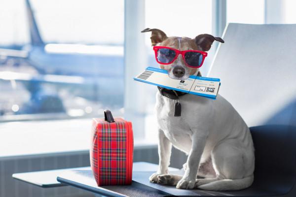 Cane o gatto sull'aereo: posso portarlo?