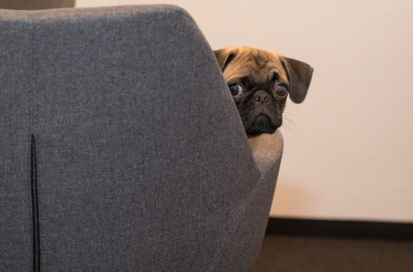 Affidamento cane: che succede con la separazione dei coniugi?