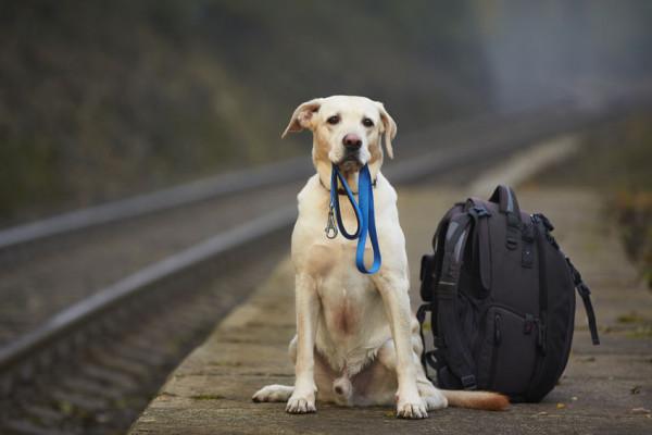 Cane o gatto sul treno: posso portarlo?