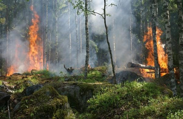 Lotto boschivo comunale in dotazione: chi paga in caso di incendio?