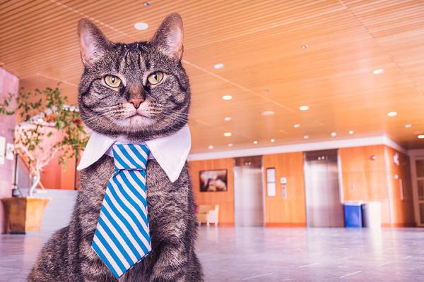 Gatti in condominio: regole