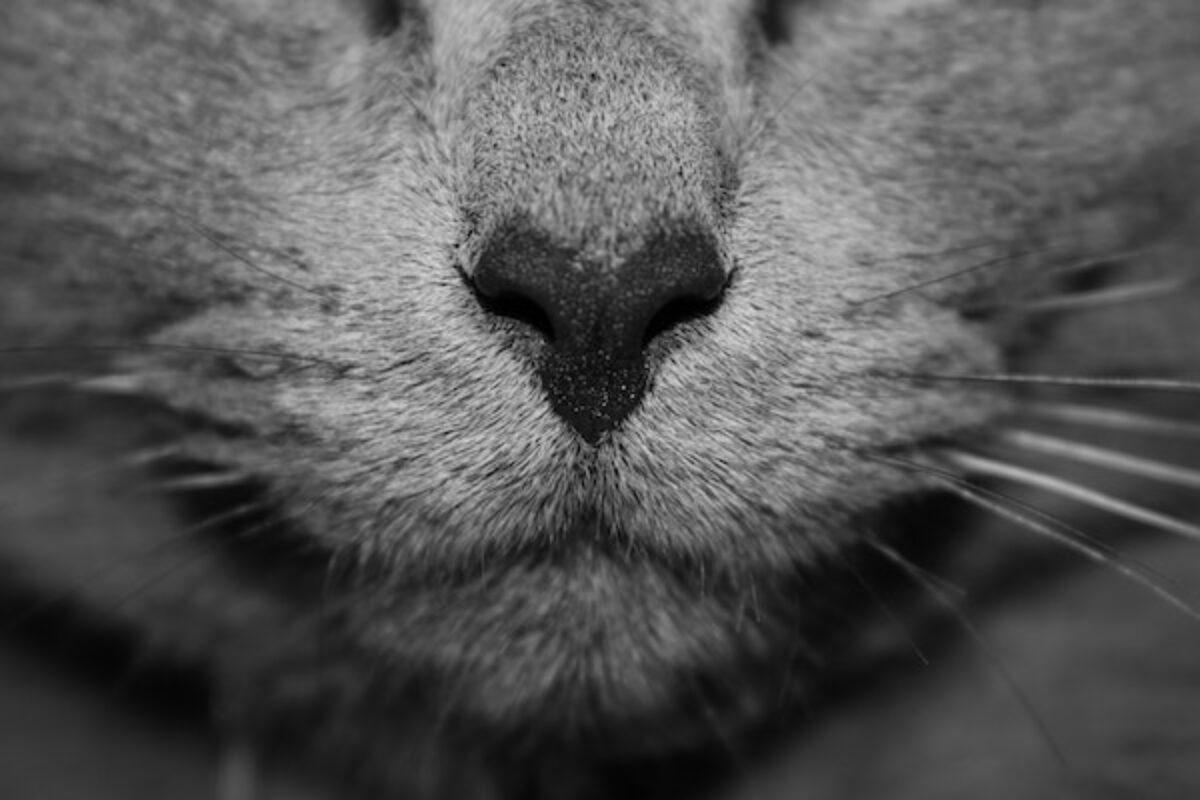 Rete Per Gatti Condominio gatto libero in condominio