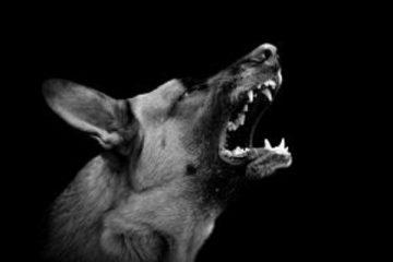 Morso da un cane: il risarcimento del danno
