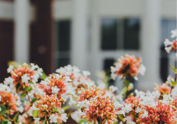 Giardino, piante, irrigazione e panchine: pratiche edilizie