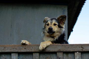 Cane sul balcone: è maltrattamento?