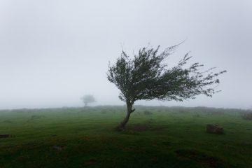 Il Comune può obbligare ad abbattere un albero?
