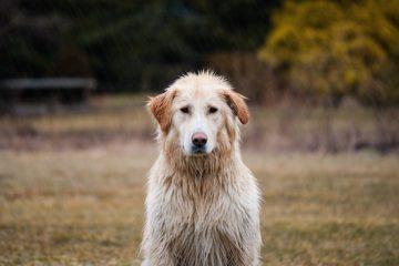 Lasciare il cane da solo in casa: cosa rischia il padrone?