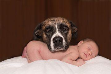 Cani e neonati: pericoli