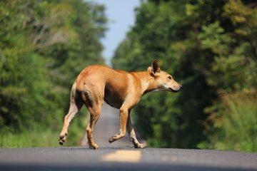 Cane abbandonato per strada: chi chiamare?