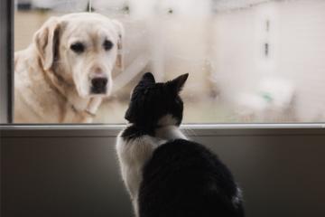 Carne di cane o di gatto: è legale mangiarla in Italia?