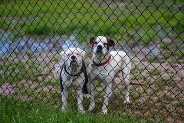 Legare il muso al cane per non farlo abbaiare è legale?