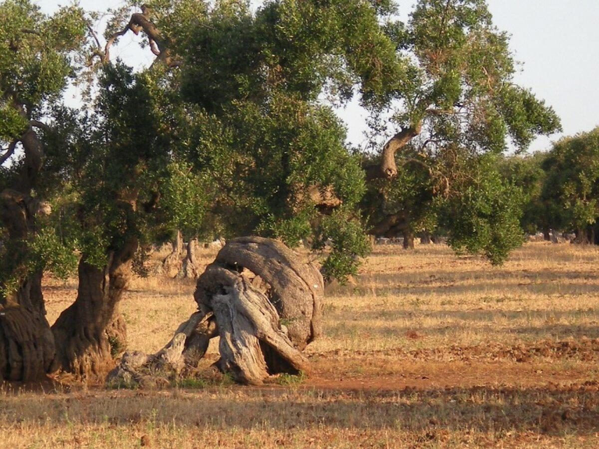 Alberi Ad Alto Fusto Quali Sono alberi monumentali: cosa sono e come vengono tutelati