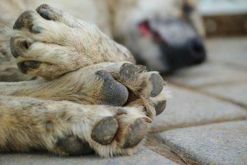 Dove denunciare la morte di un cane