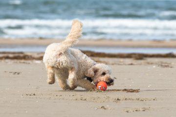 Divieto cani in spiaggia e regole di comportamento