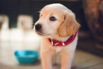 Quale cane vive più a lungo?
