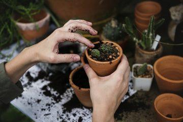 Le piante della salute che non devono mancare in casa
